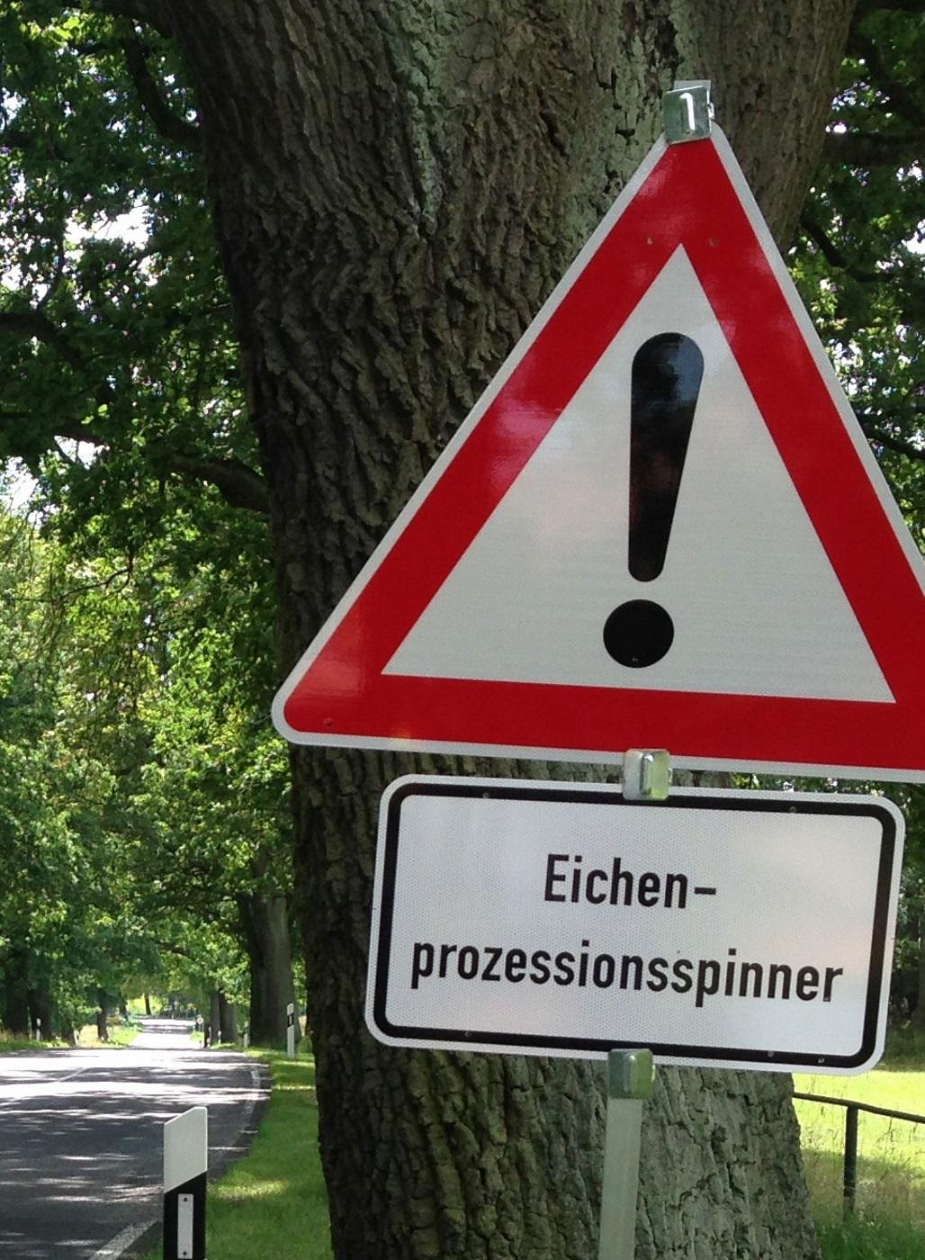 Warnschild Eichenprozessionsspinner am Straßenrand.
