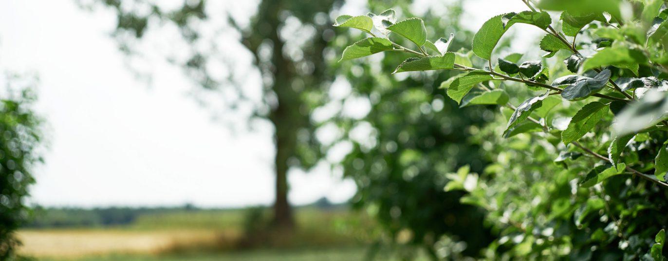 Blick auf Sträucher, Bäume, Wiese und Feld