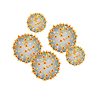 Viele Coronaviren